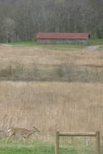 Bells Bend Barn