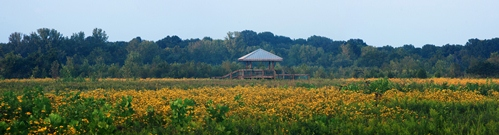 Shelby Bottoms Wildflower Panorama by James Fullerton